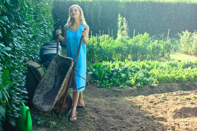 Top Ideas To Improve Your Garden
